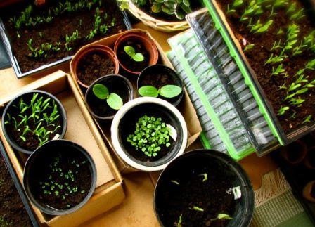 Подготовка семян к посеву на рассаду