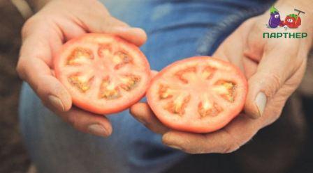томат партнер семко отзывы