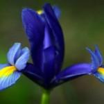 Каталог лучших, многолетних цветов для дачи с фото, названиями, и описанием