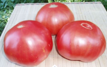томат райское наслаждение