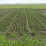 Огород без хлопот: не копать, не полоть и не поливать