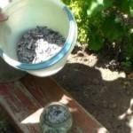 Подкормка винограда когда и чем, весной и осенью