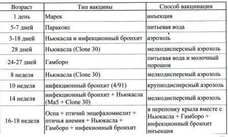 Вакцинация кур, таблица