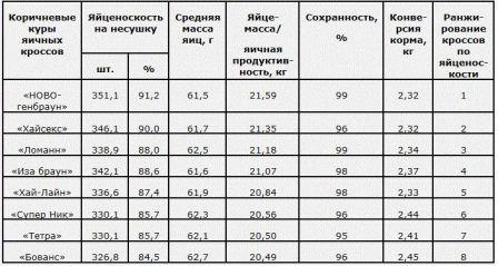 lychshie_porody_nesyshek
