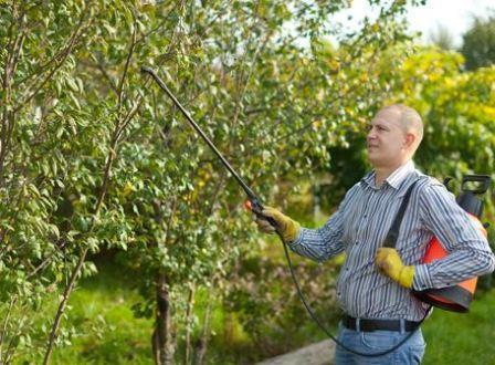 Чем обработать сад от болезней и вредителей