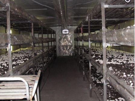 Помещение для выращивания шампиньонов фото