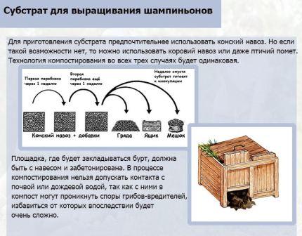 Как выращивать шампиньоны в домашних условиях