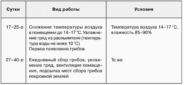 shampinonu_v_domashnix_usloviax_22