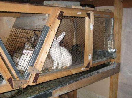 фото клетки для кроликов