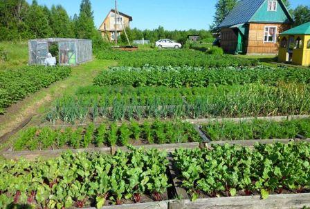 Овощи на огороде