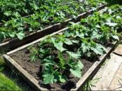 Посадки овощей в июне