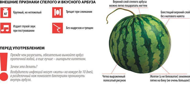 Как определить спелость арбуза