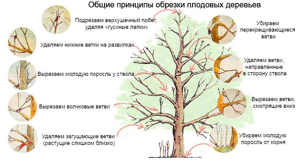 obrezka_plodovyx_dereviev