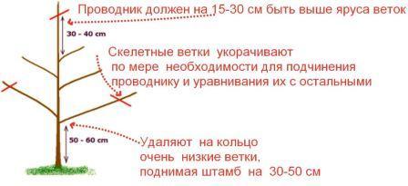 obrezka_vishni_vesnoy