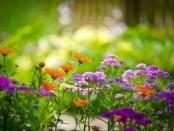 Цветы многолетники для кладбища