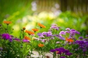 cvety_pamiati