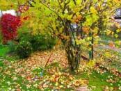 Работы в саду и огороде - сентябрь