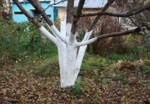 Чем побелить дерево
