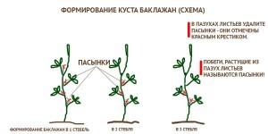 Формирование куста баклажанов
