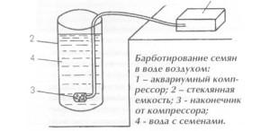 podgotovka-semyan4