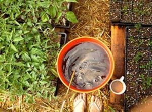 подкормка перцев и баклажан