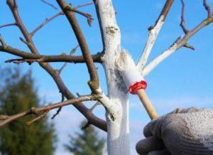 поебелка деревьев осенью