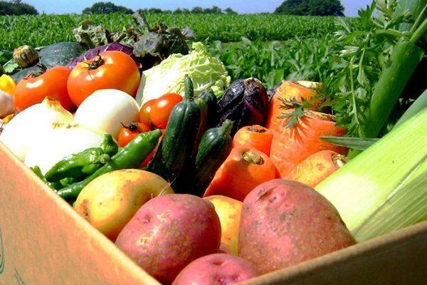 фермерские овощи