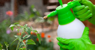 защита овощей от вредителей