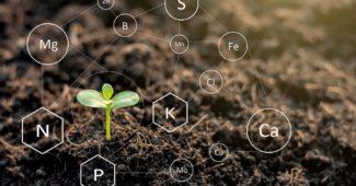микроэлементы в почве