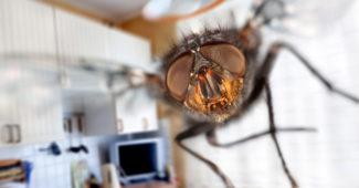 мухи в доме