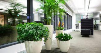 декор из растений